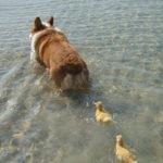 【動物】種族を超えた友情、それとも愛情!?仲良しな動物達の写真