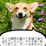 笑顔で人生を語る幸せいっぱいの動物達の珠玉の一言 その4