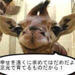 笑顔で人生を語る幸せいっぱいの動物達の珠玉の一言 その2