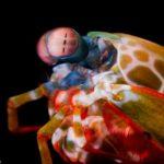【生物】テラフォーマーズの鬼塚さんに聞いてみたい!シャコの見ている風景に関する研究