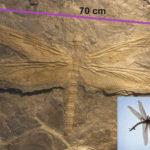 太古から学ぶ生物学:石炭期と巨大昆虫と酸素濃度