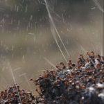 【動物】一斉に蟻酸を吹き出す蟻の群の決定的瞬間