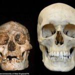 フローレス島に住んでいた小さなホビットは人類とは別な種族であることが判明