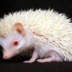 全身が白くて目が赤!美しいアルビノの動物たちの写真