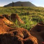 【動物】信じられないくらい巨大な蟻の巣が見つかる