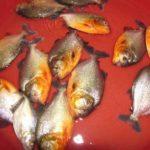 【この発想はなかった!】アマゾン川のピラニアが大漁の衝撃の釣法が明らかになる