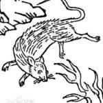 獐鼠、火鼠、驢鼠:鼠の妖怪もいっぱいいる中国の鼠の妖怪特集
