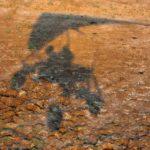 【動物】勝ち負けなどどうでもいい。カバの大群とワニの大群の大自然の中の壮大な闘い。
