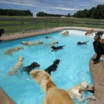 【きょうのわんこ】犬たちが一斉にプールで泳ぐ