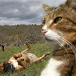 【ねこ日記】人間みたいに自画撮りをする猫達