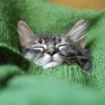 【ねこ日記】頑張っておしゃれをした子猫達の可愛い写真22選