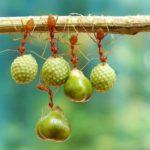 【動物】自然の中の躍動感あふれる小動物達の写真集