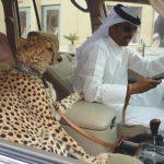 【驚愕】OIND:ドバイでのみ見られる非日常的光景(Only IN Dubai)