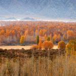 【中国】新疆アルタイのチンギル(青河)県の秋の風景