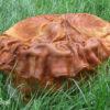 視肉:太歳とも呼ばれ不老長寿を与える古代中国の仙薬の原料