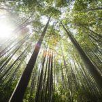 日本の古典に見る中国神話1:竹取物語