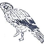 中国神話の奇妙な鳥を集めてみた。怪鳥特集7(青耕、数斯、櫟、鴟)
