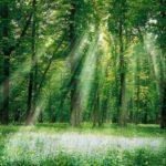 光合成の際には緑色の光はあまり使われていない