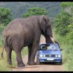 象の大きさが分かる写真。サファリツアーで象に出会った人々