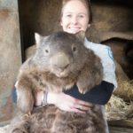 【動物】意外と可愛い大きなぬいぐるみみたいな巨大ウォンバット、パトリック♂(29歳)